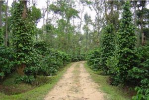 Invisible Communications in Coffee Plantations