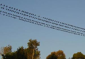 BIRDPOPULATION