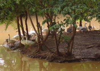 8islandbirds