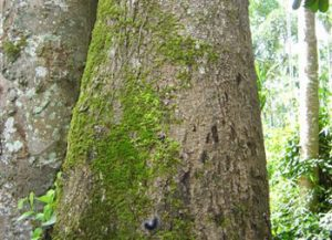 Significance of Microbial Interactions Within Coffee Plantations