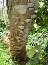 fungi15