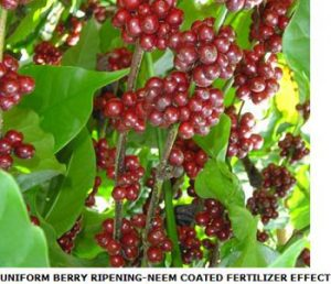 Neem Based Fertilizer Use Efficiency