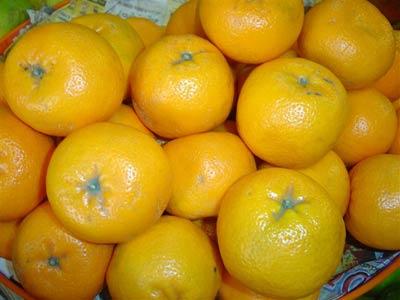 citrus2006slide-4