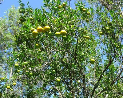 citrus2006slide-7