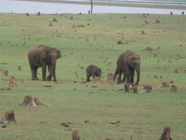 3-elephants_2628053446_o