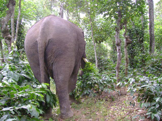 behind-an-elephant_2624306391_o
