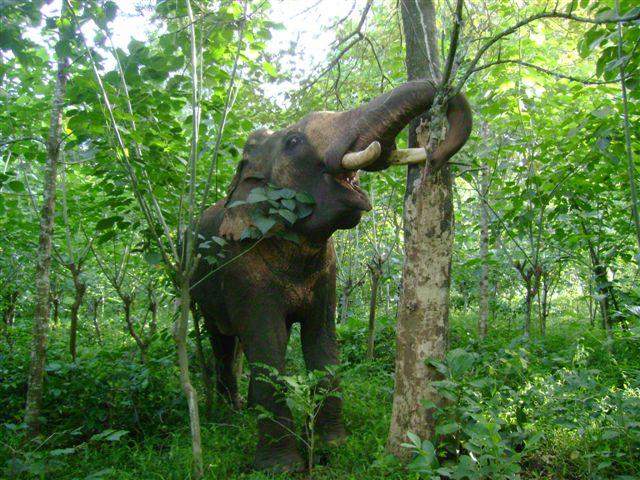 elephant-and-tree_2625130280_o