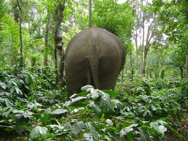elephant-backside_2625130560_o