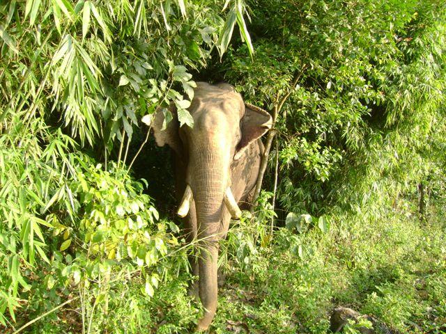 elephant-coffee-forest_2625130400_o