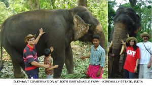 Human Elephant Conflict Inside Coffee Forests