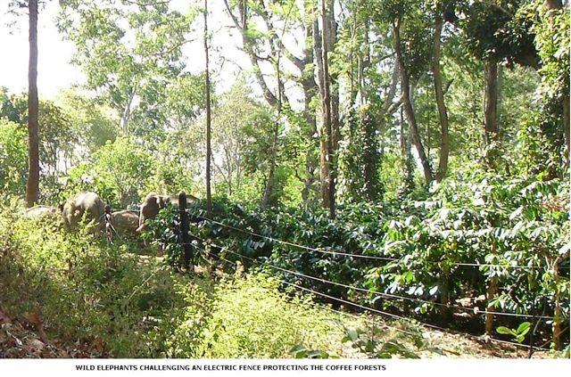 elephants-and-electric-fence_2625131016_o