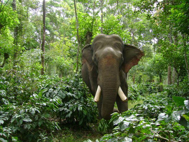 facing-an-elephant_2625130738_o