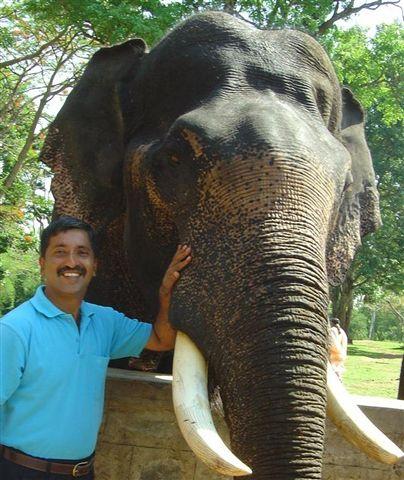 india-elephant_2624306865_o