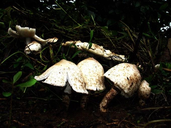 mushroom-06_2889710085_o