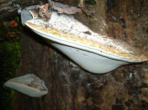 mushroom-12_2890546412_o