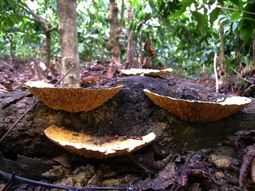 mushroom-16_2890547510_o