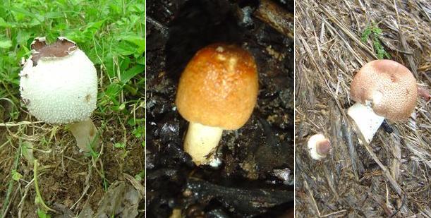 mushroom-20_2889712517_o