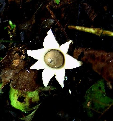 mushroom-26_2889709761_o