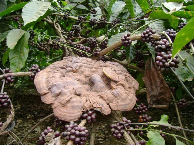 mushroom-27_2890547064_o