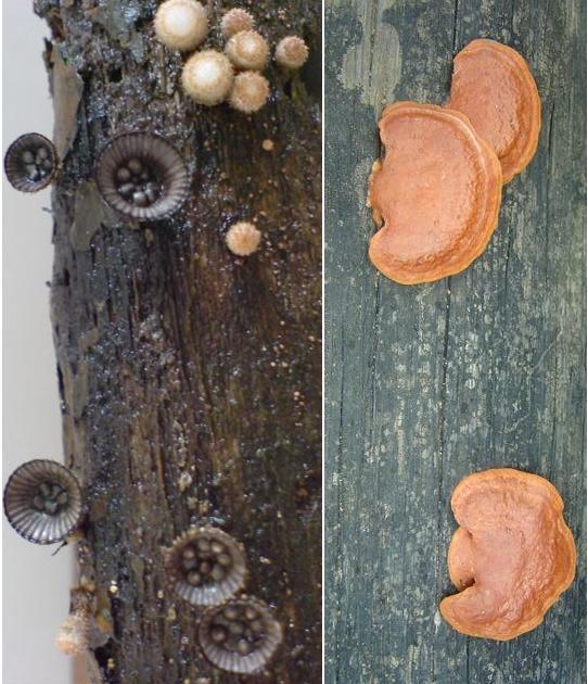 mushroom-28_2890547856_o