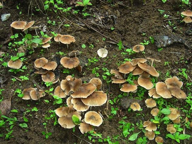 mushroom-30_2889709239_o