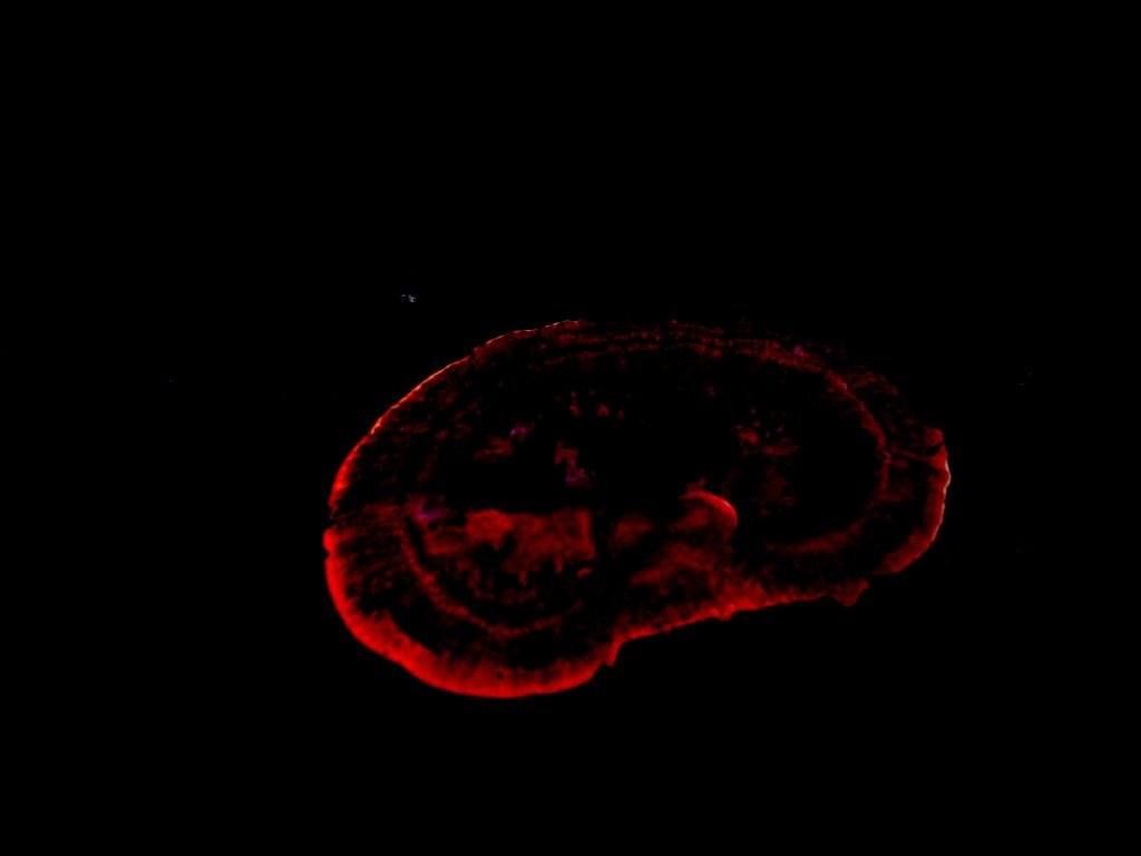 mushroom-43_2889711091_o