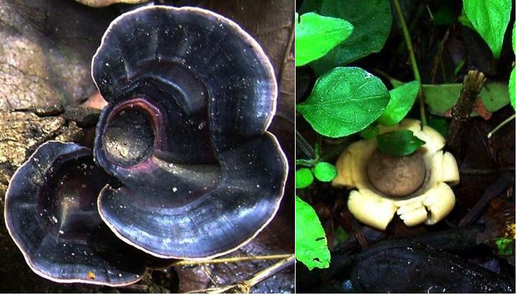 mushroom-55_2889713109_o