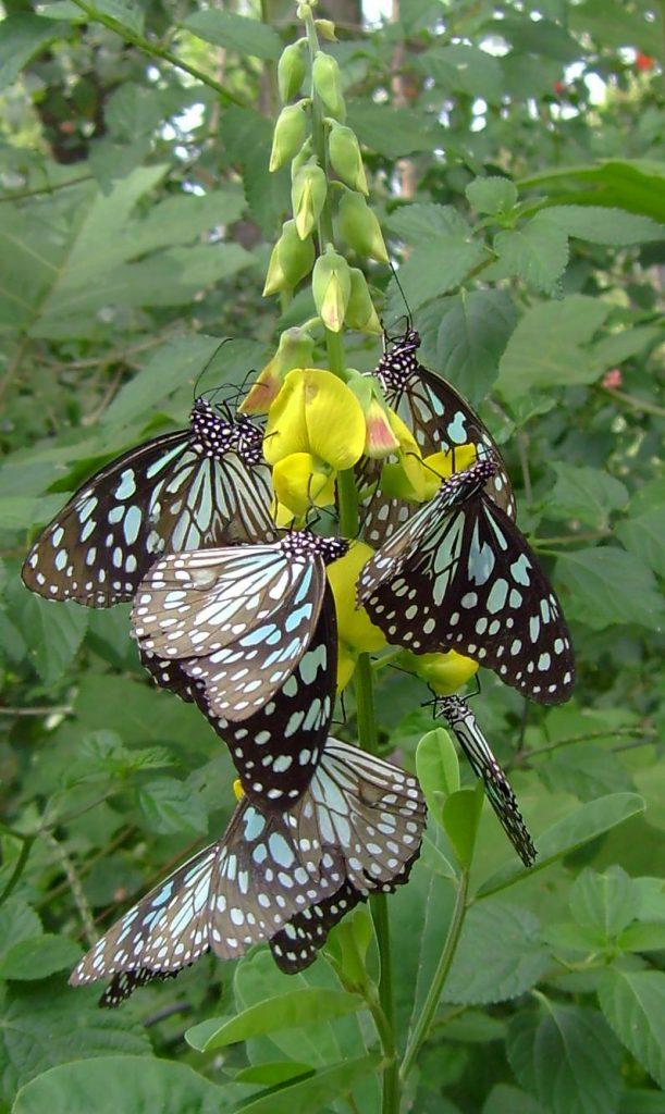 butterfly-01_3081926771_o