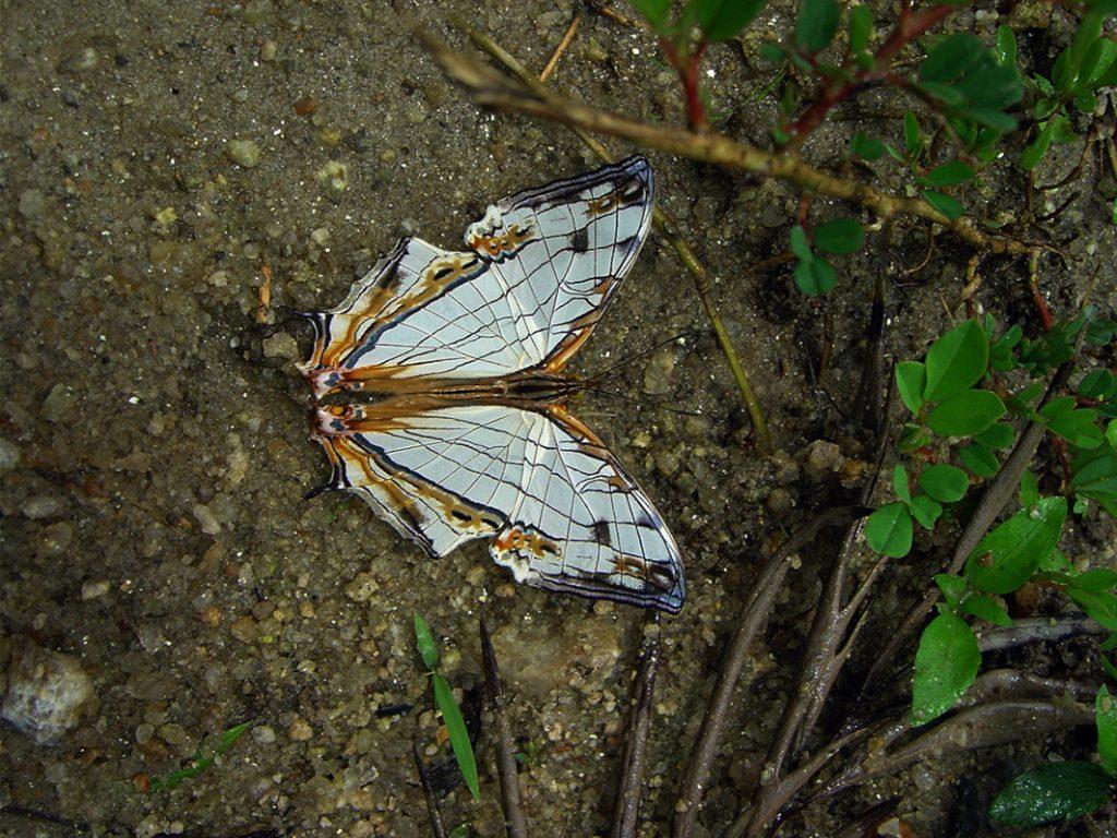 butterfly-02_3082756288_o