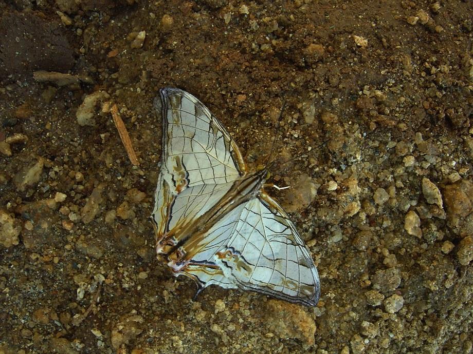 butterfly-03_3081915885_o