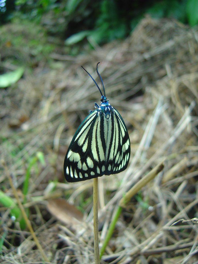 butterfly-05_3081916095_o