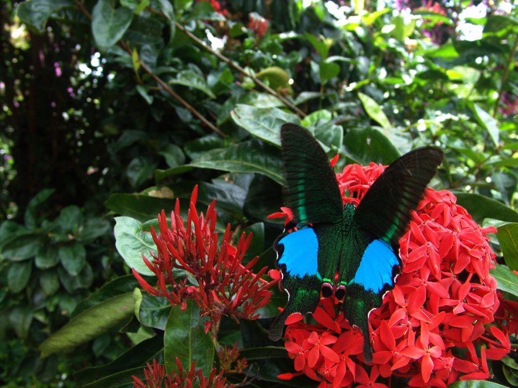 butterfly-07_3081926453_o
