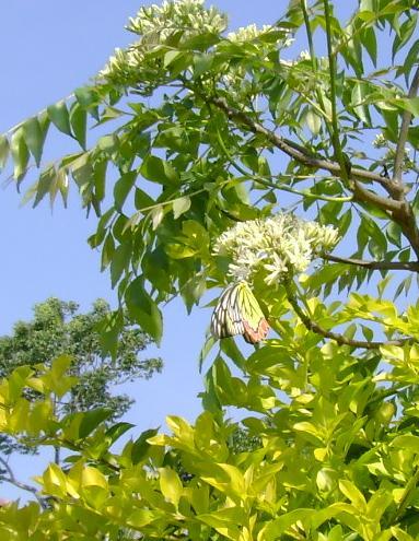 butterfly-08_3081926479_o