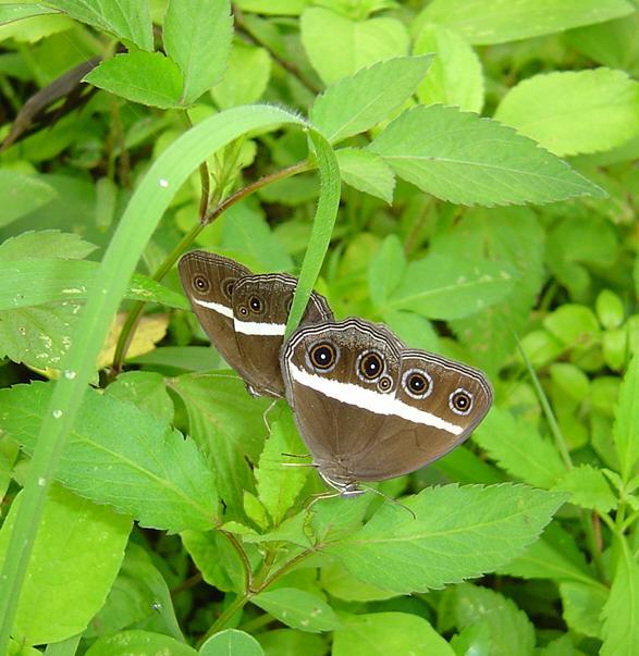butterfly-11_3081926505_o