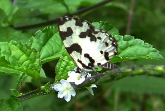 butterfly-12_3081926839_o