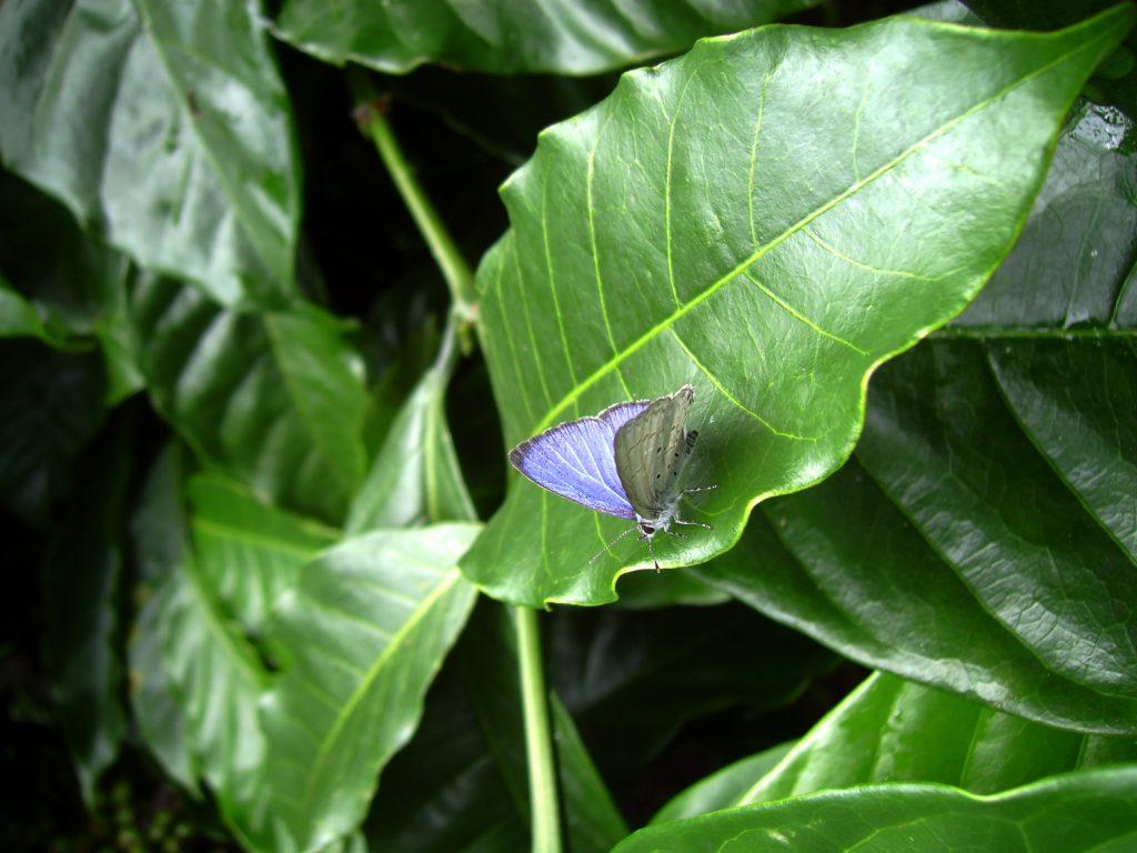 butterfly-13_3082760850_o