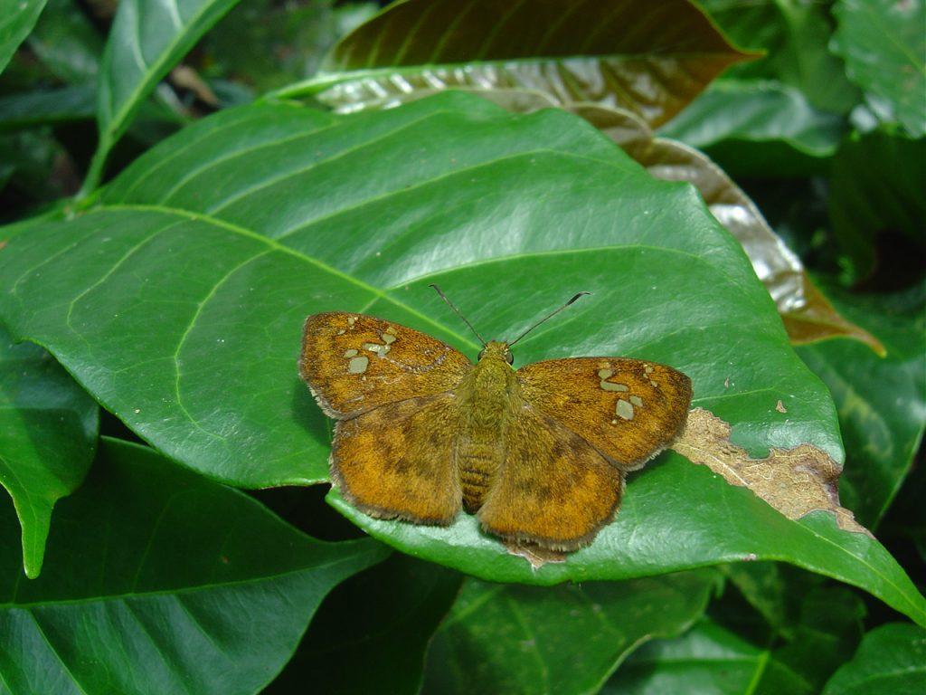 butterfly-14_3082756622_o