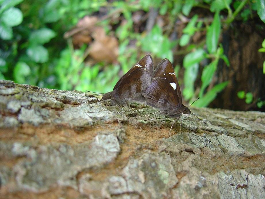 butterfly-15_3082756916_o