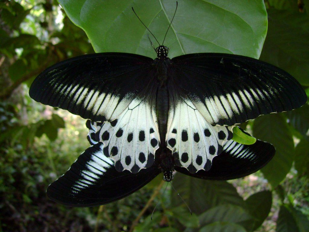 butterfly-16_3081922483_o