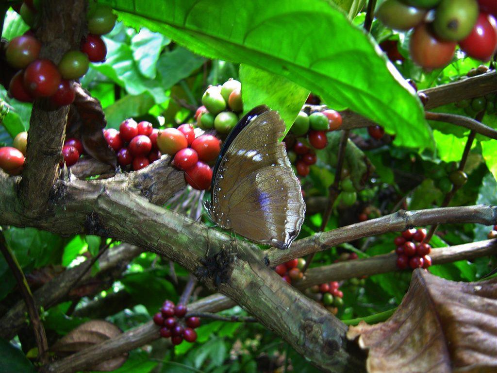 butterfly-17_3081918587_o