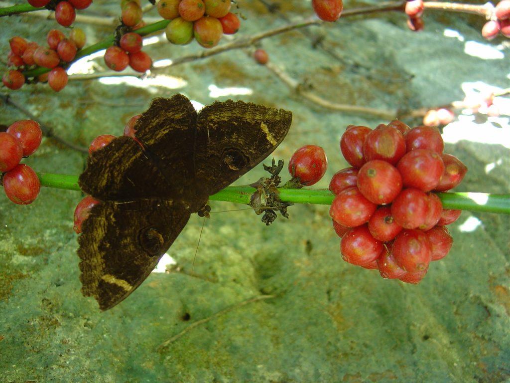 butterfly-18_3082755906_o