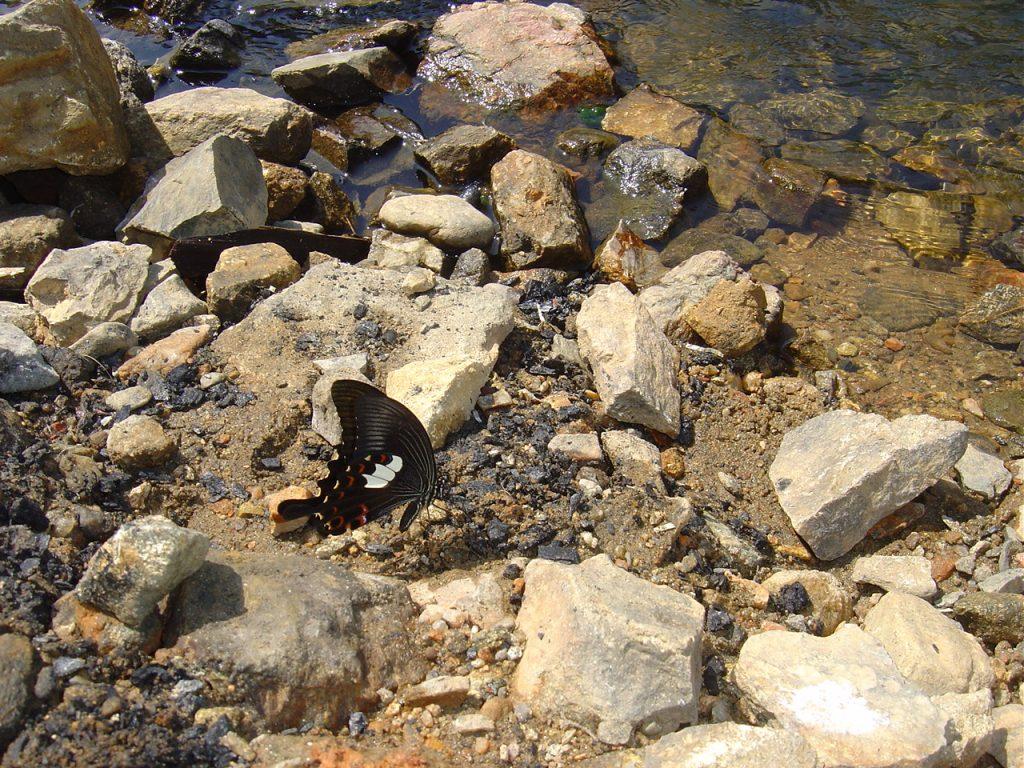 butterfly-19_3081918369_o