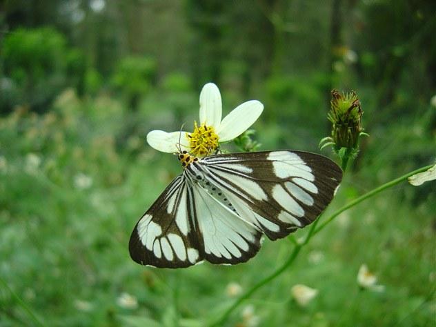 butterfly-20_3081916771_o