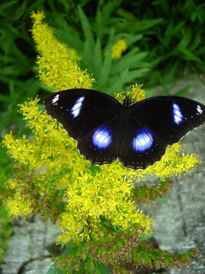 butterfly-21_3081917115_o