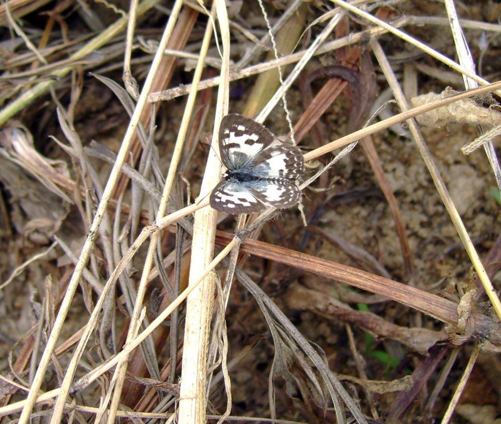 butterfly-23_3081924063_o
