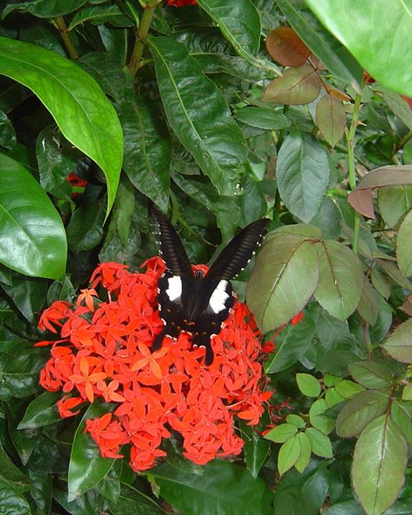 butterfly-24_3081917737_o