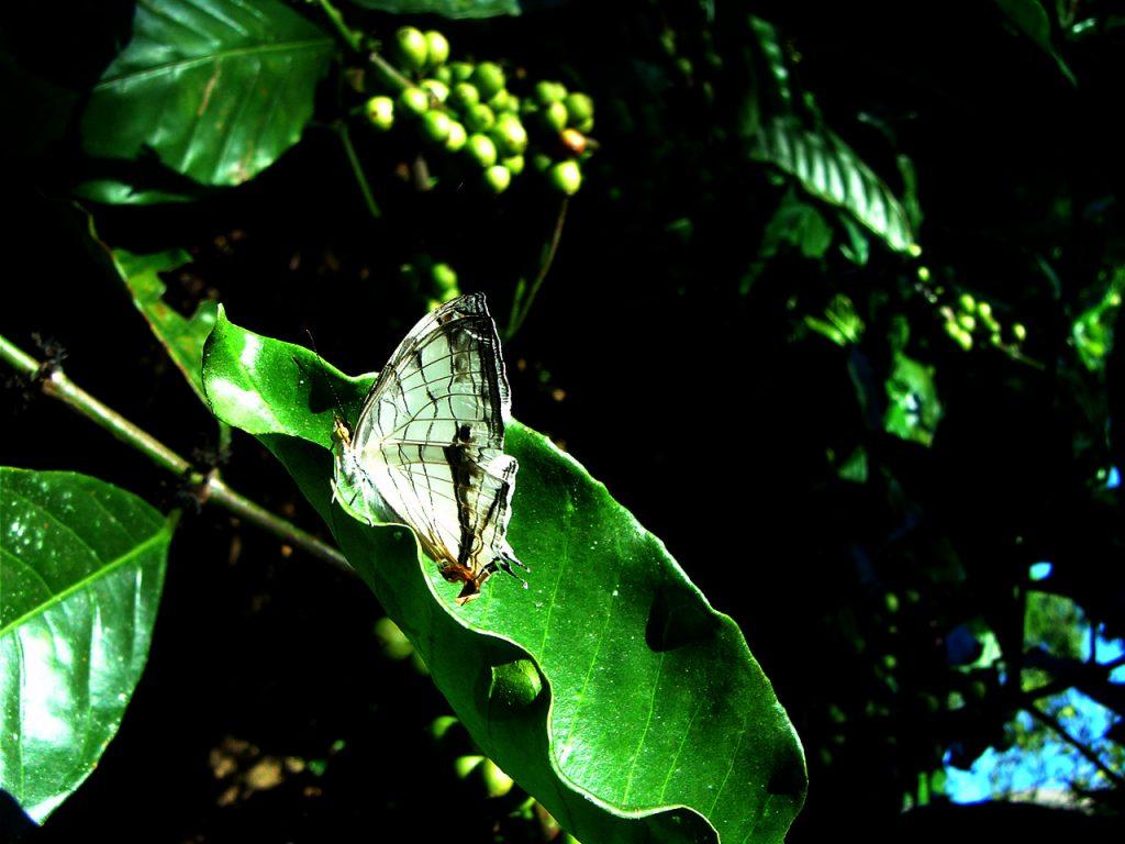 butterfly-25_3081915567_o
