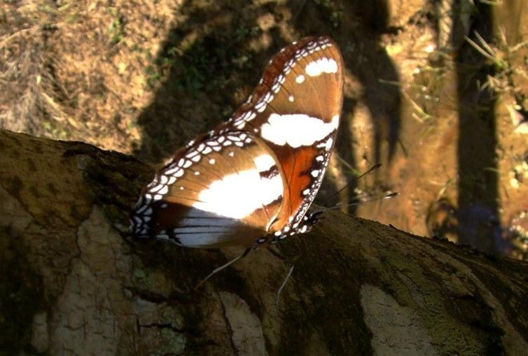 butterfly-26_3081926937_o