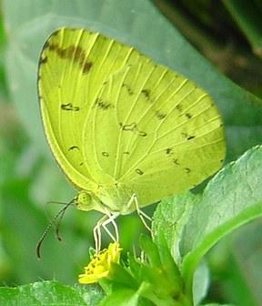 butterfly-27_3082766384_o