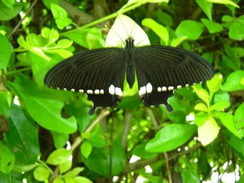 butterfly-28_3081917167_o